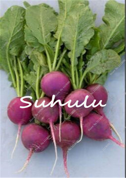 Dark Red Beetroot Seeds Edible Delicious Organic Vegetables Sedds Bonsai Plant Home Garden Easy To Grow Beet Seeds 50 Pcs